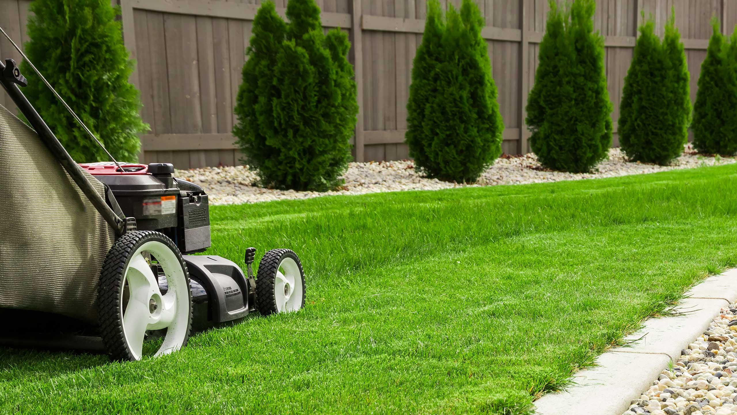 Скашивание газона газонокосилкой