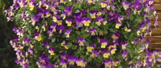 Ампельные растения для сада: фото и названия
