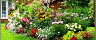 Красивые клумбы и цветники на даче своими руками + фото и видео