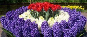 Многолетние садовые цветы + фото