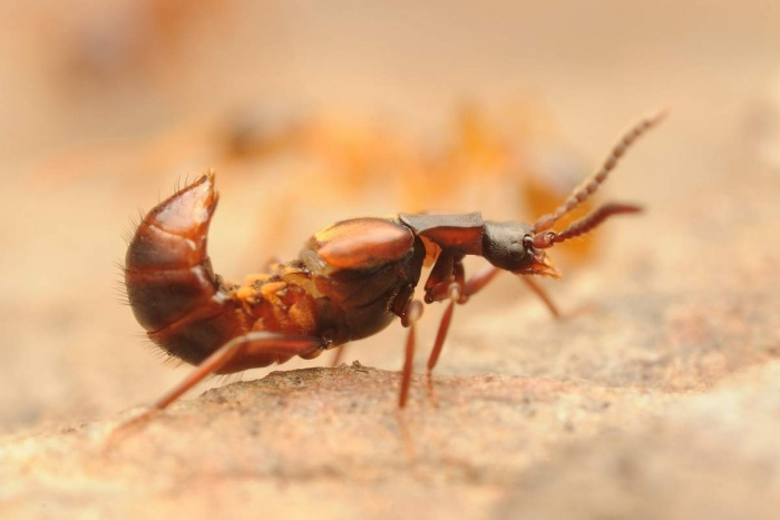 Средство от муравьев на даче