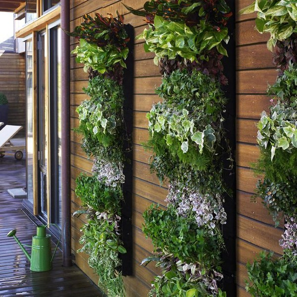 Вертикальное озеленение на даче + фото