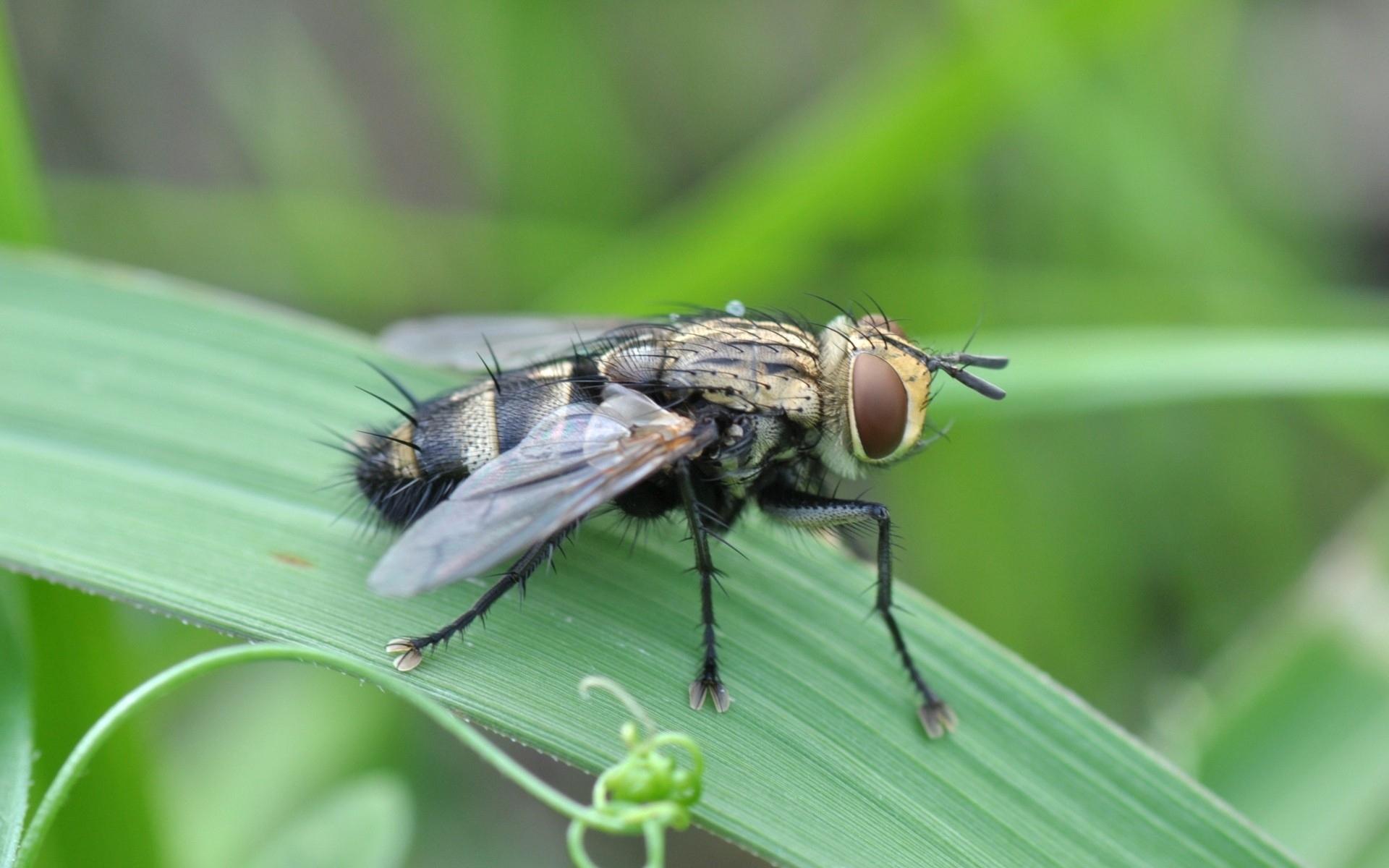 Растительно-ядные мухи